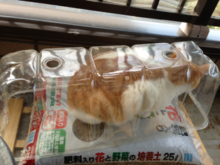 iphone/image-20130330175332.png